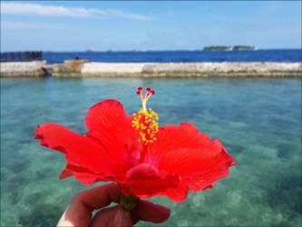 maldives by Juniper85