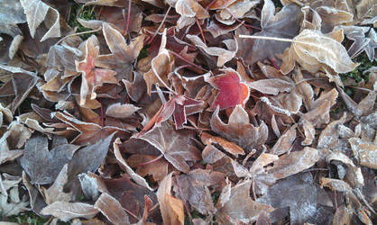 Frosty Leaves by SeraphsAngel