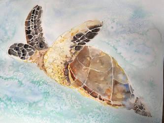 Turtle by Gaabs