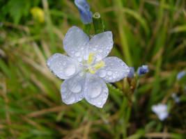 flower stock 07 by firedance99