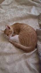 Beautiful cat nap by LETMESEEBEUTY