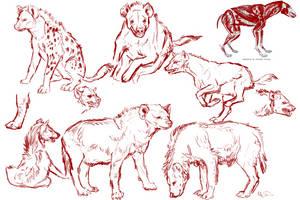 Spotted Hyena Study Sketches by james-talon