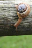 Snail by Stewdog