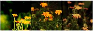 Historia opowiedziana kwiatami by leyeq