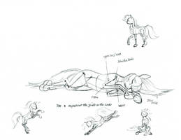 Pony figure drawing notes. by Baron-Engel