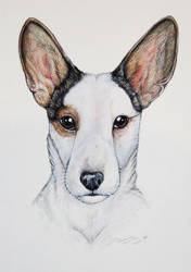 Freckles by TwilitTiger