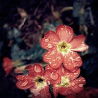 Little Hearts by Anca-Mihaela