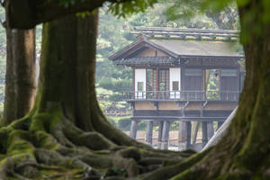 Root Framed Pavillon 2 by Quit007