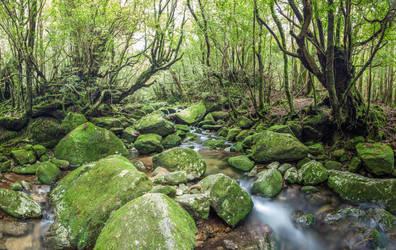 Yakushima Stream by Quit007