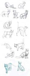 cat's body by sofmer