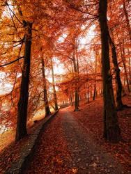 Walk With Me by MichalKownacki