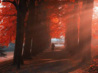 Shine by MichalKownacki
