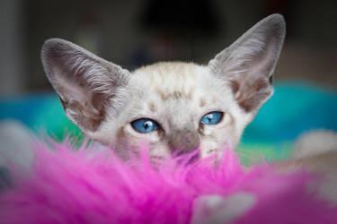 New Kitty 1 by wishez