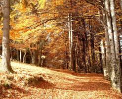 Autumn by bokka