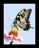 Blob Brush Butterfly by Daniel-Storm