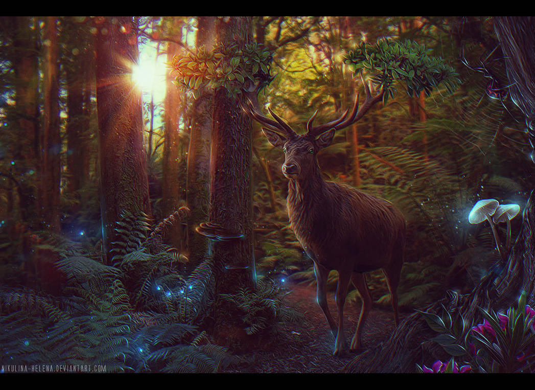 Enchanted Forest + Video by Nikulina-Helena