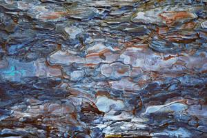 Tree Bark Texture by Nikulina-Helena
