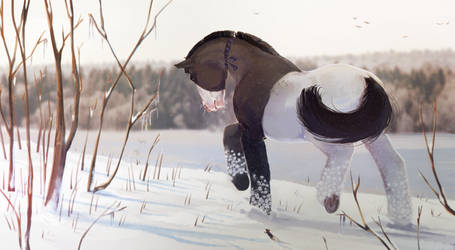 Snow field by PacificNoir