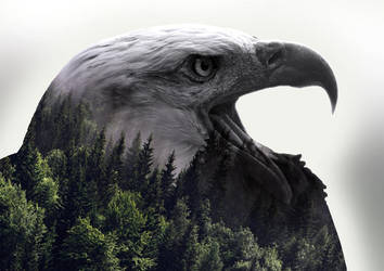 Eagle Double Exposure by BitsN