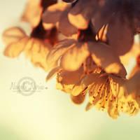 Spring Light by NayeliNeria