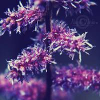 Pink Purple by NayeliNeria