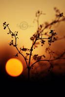 Evening Light by NayeliNeria
