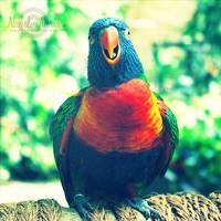 Singing Rainbow by NayeliNeria
