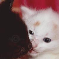 Kiss by NayeliNeria