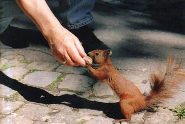 squirrel by regoodstuff