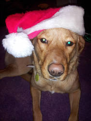 Merry (belated) Christmas from Santa Paws :3 by That--Ginger--Kid