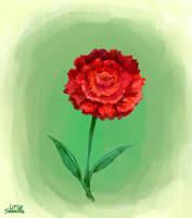 Carnation by LittleSnaketail