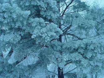 Frosty morning by DavidGaspur