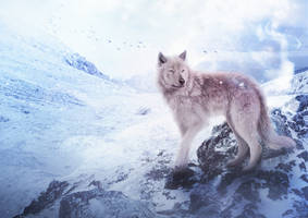 AT: cold wind blows by Fiirewolf
