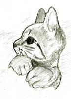 Kitten. by mysticmadman