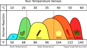 Your Temperature Senses by doctormo