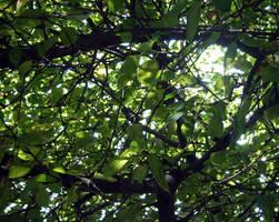 Foliage 1 by codrii-vlasiei