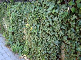 Foliage 3 by codrii-vlasiei