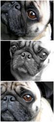My dog, my love by Cactuzzz