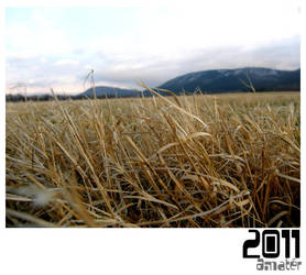 Winter grass by Cactuzzz
