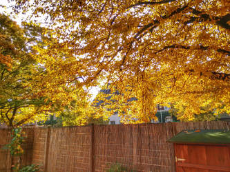 Autumn colors by mrberni