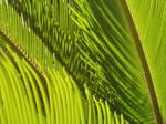 Palms II by MasterTeska