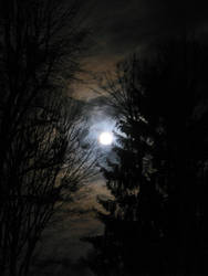 Mr. Moonlight by UkoDragon