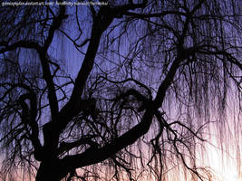 Weeping Willow branches by GuineaPigDan
