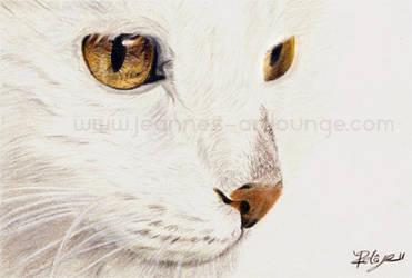 Snow Cat by Jeanne-Lui