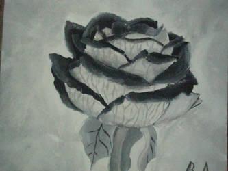 Black Rose... by HateForFree