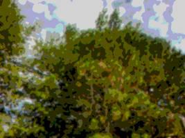 Tree by phoenixreal