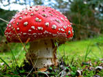 Magic Mushroom by Tul-152