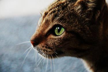 Kucing Dekanat by fildzahraihan