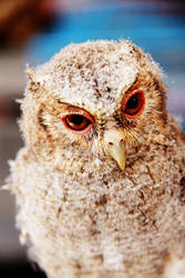 Owly by fildzahraihan