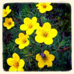 Wild Flowers VII by lunacatd